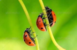 Spring green plants and lucky ladybug macro